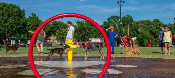 Barney Wood Bark Park in Farmers Branch TRAPS Award