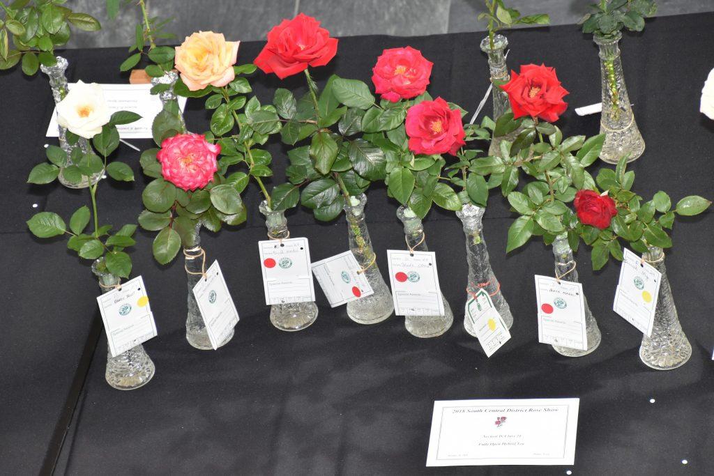 Celebration of Roses Farmers Branch