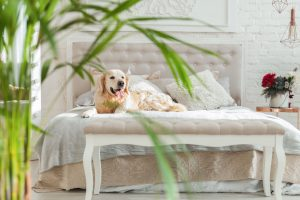 Pet Friendly Hotels in Farmers Branch