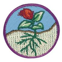 Junior Flowers Badge available at Power to the Pollinators program in Farmers Branch