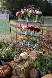 Celebration of Roses in Farmers Branch